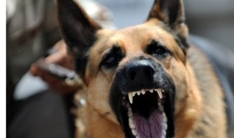Looking for tips on how to socialize an aggressive dog? Read on for 7 steps that will help Fido move past his aggression issues.