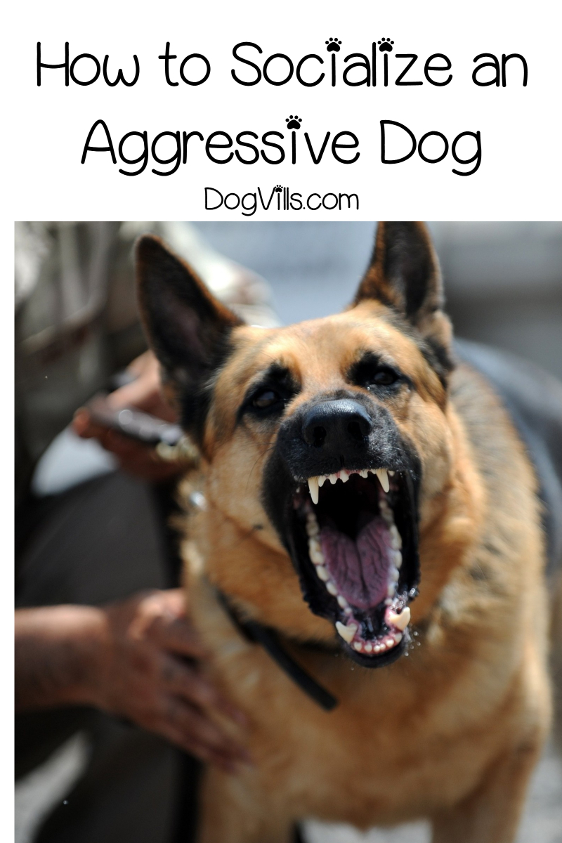 How to Socialize an Aggressive Dog (in 7 Steps)
