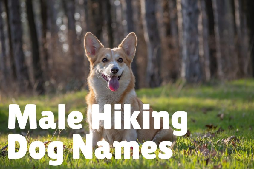 MALE HIKING DOG NAMES