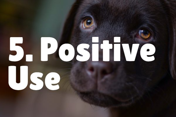 positive use how to teach puppy their name