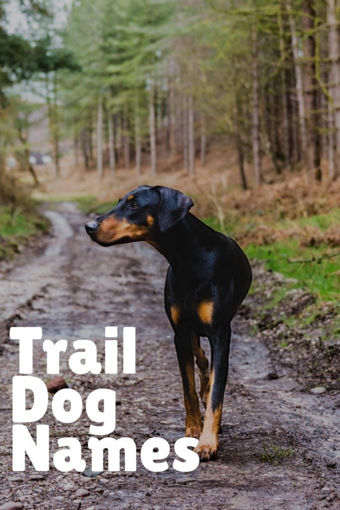 Trail Dog Names