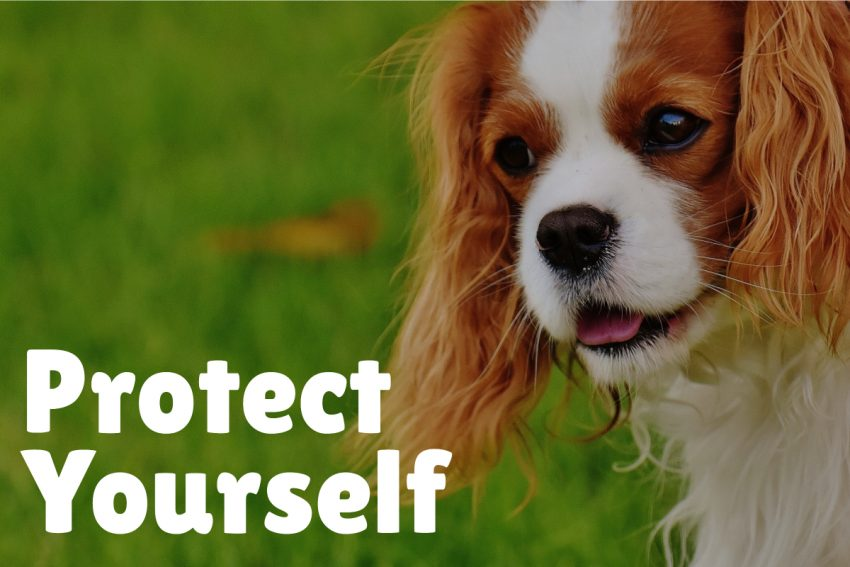 If you have an iffy dog in the neighborhood which is constantly off-leash, consider getting a self-defense spray.
