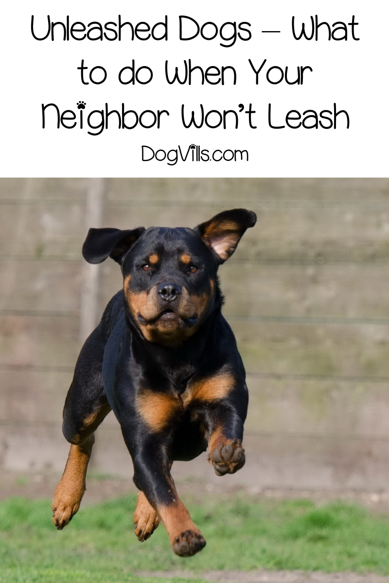 Unleashed Dogs – What to do When Your Neighbor Won't Leash