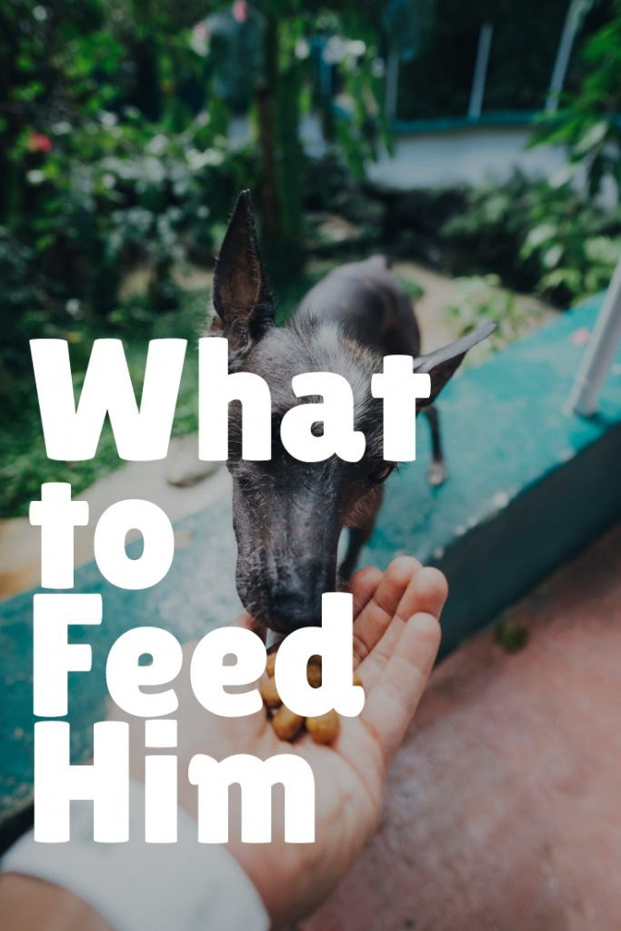 What to Feed a Dog Not Eating In Summer
