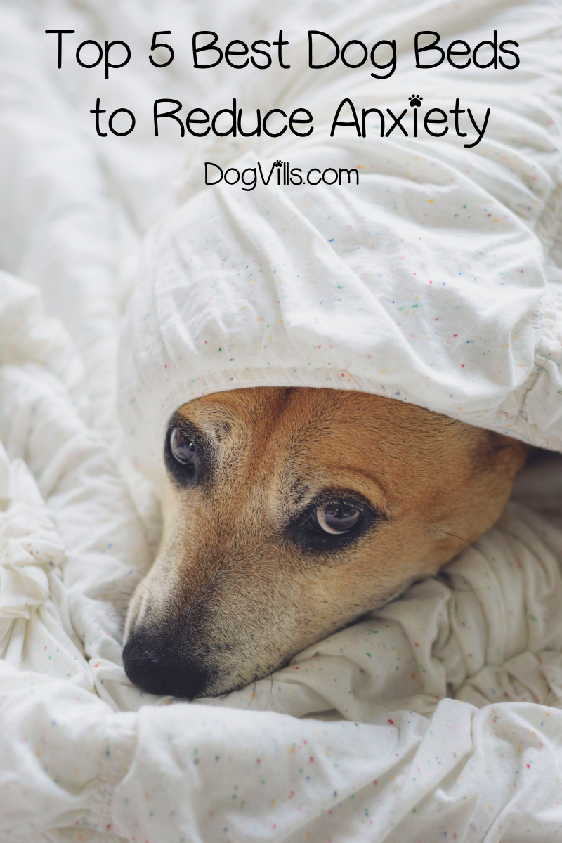 Top 5 Best Dog Beds to Reduce Anxiety