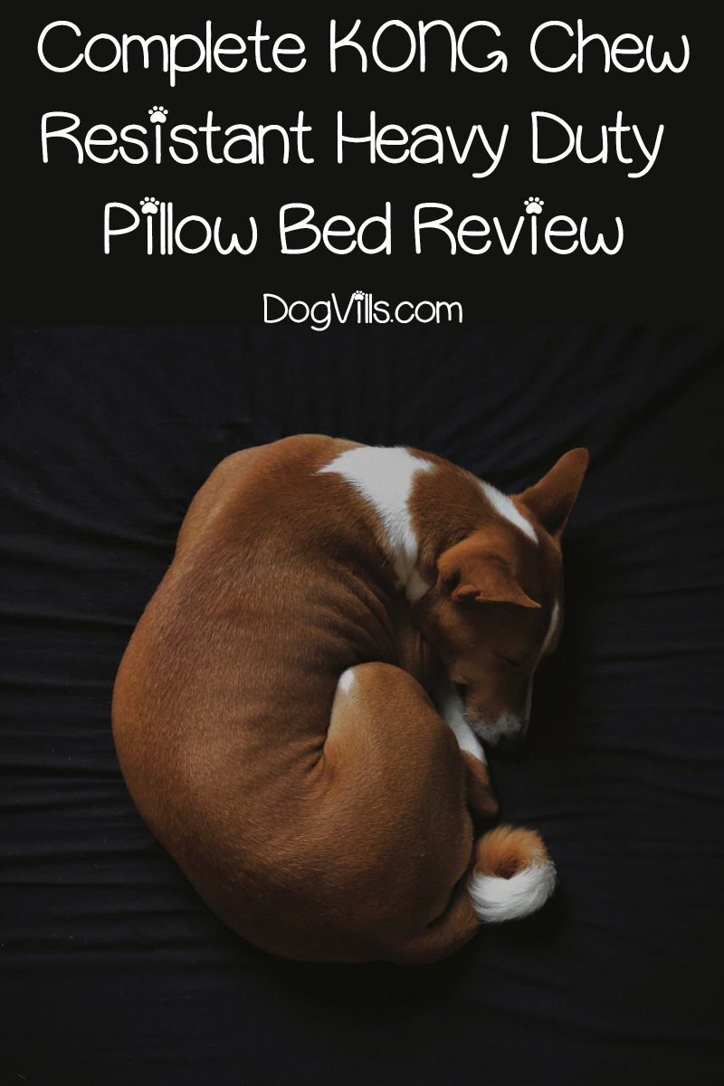 Complete KONG Chew Resistant Heavy Duty Pillow Bed Review