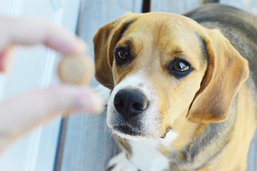 Looking for the perfect homemade mini training dog treats recipe? You'll love this easy 3-ingredient recipe! Find out how to make it!