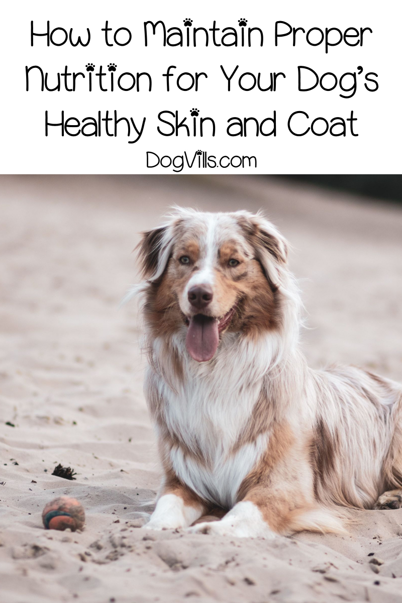 Guide to Proper Nutrition for Maintaining Healthy Skin and Coat