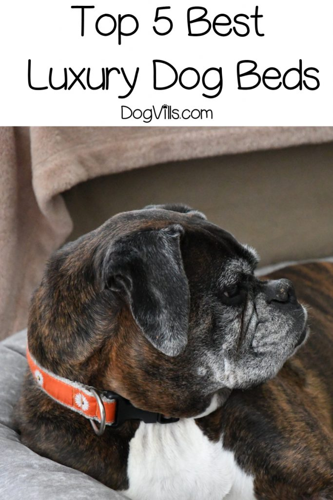Looking for the best luxury dog beds for your pampered pooch? Read on for our top five picks, plus find out why you should invest in a luxury bed!