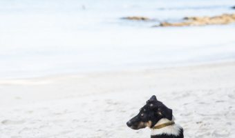 If you're on the search for the best surf dog names for your beach-loving pup, I've got you covered! Check out the top 100 ideas for male & female pups!