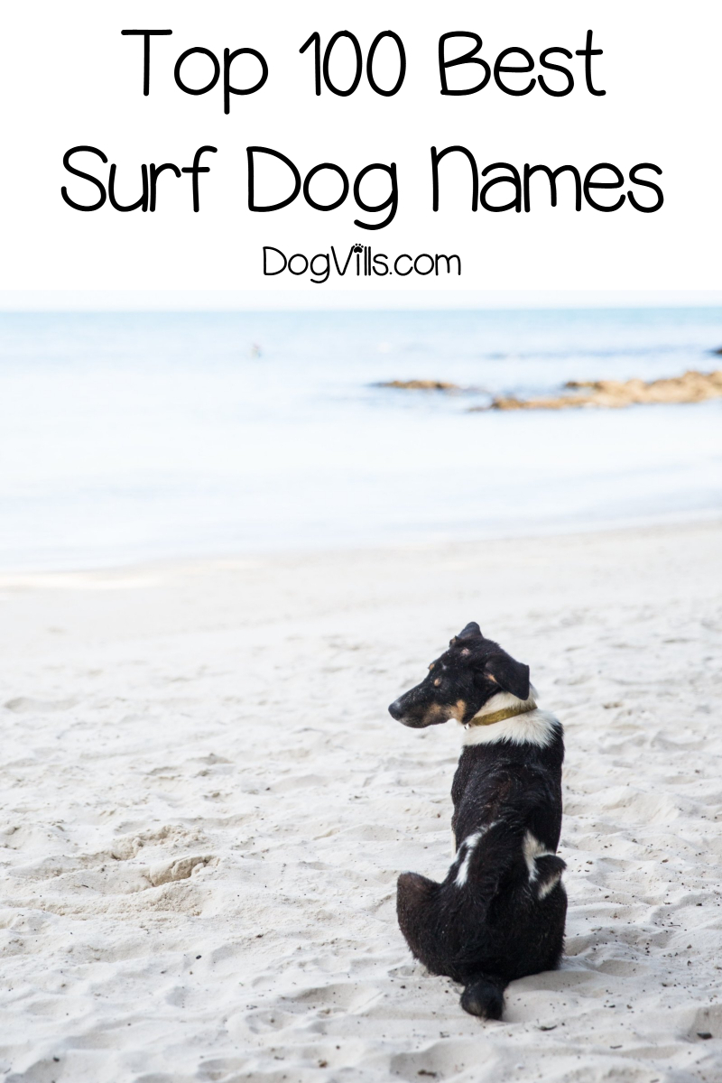 Top 100 Surf Dog Names for Beach-Loving Pups