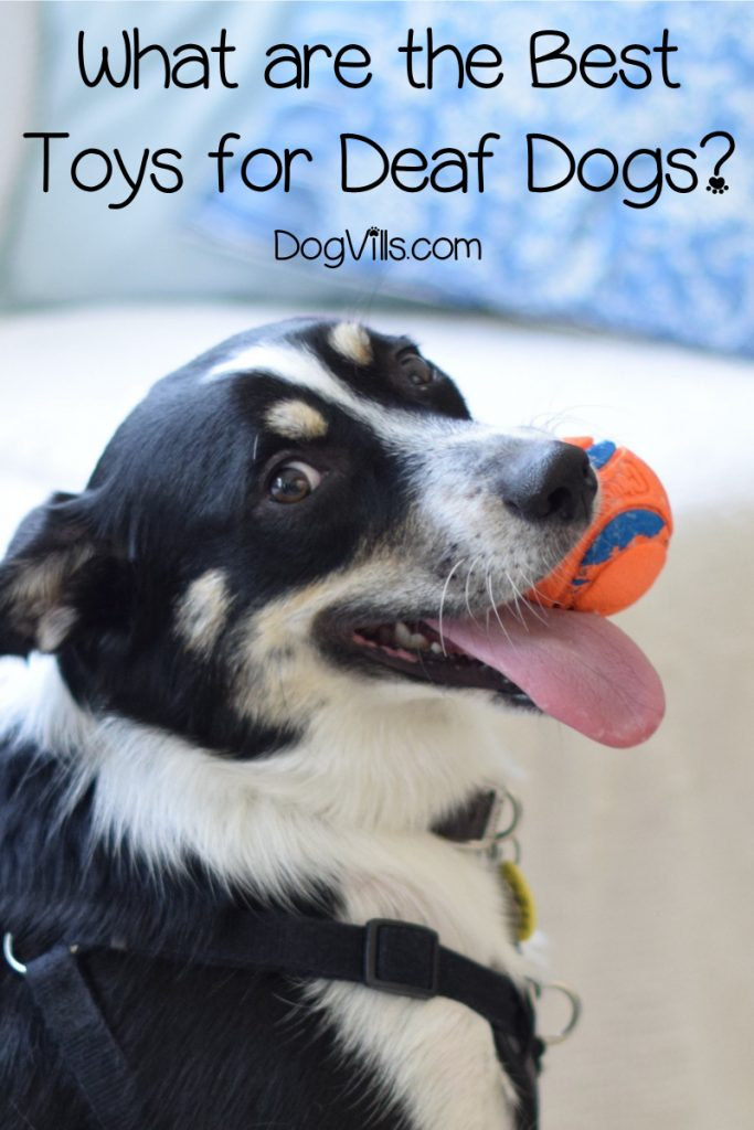 Looking for the best toys for deaf dogs? Read on for our top ten picks that stimulate their other senses, plus find out what to consider when shopping for deaf dog toys!