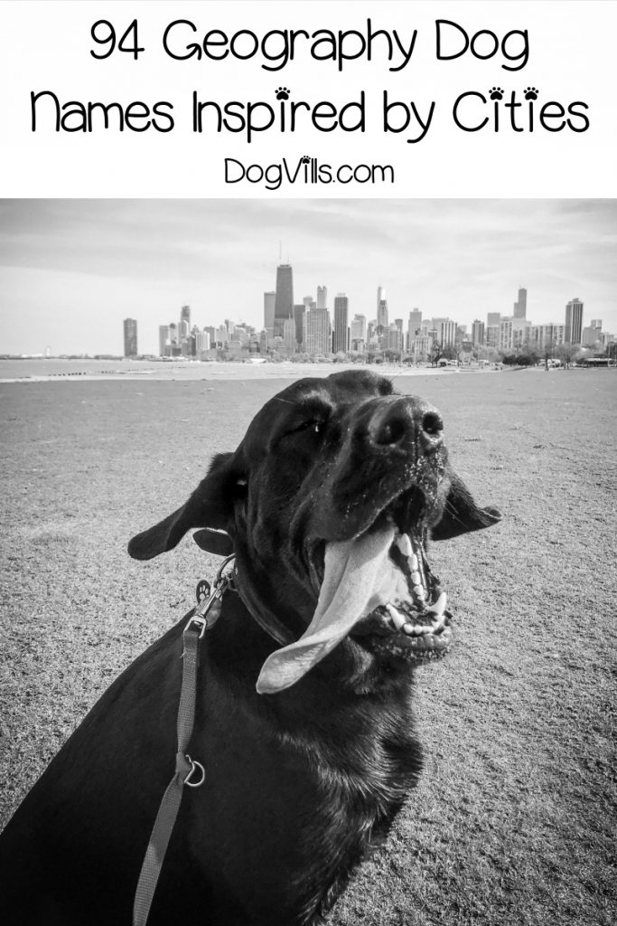 Looking for the best geography dog names? Check out these 94 inspired by cities, then keep reading for more ideas!