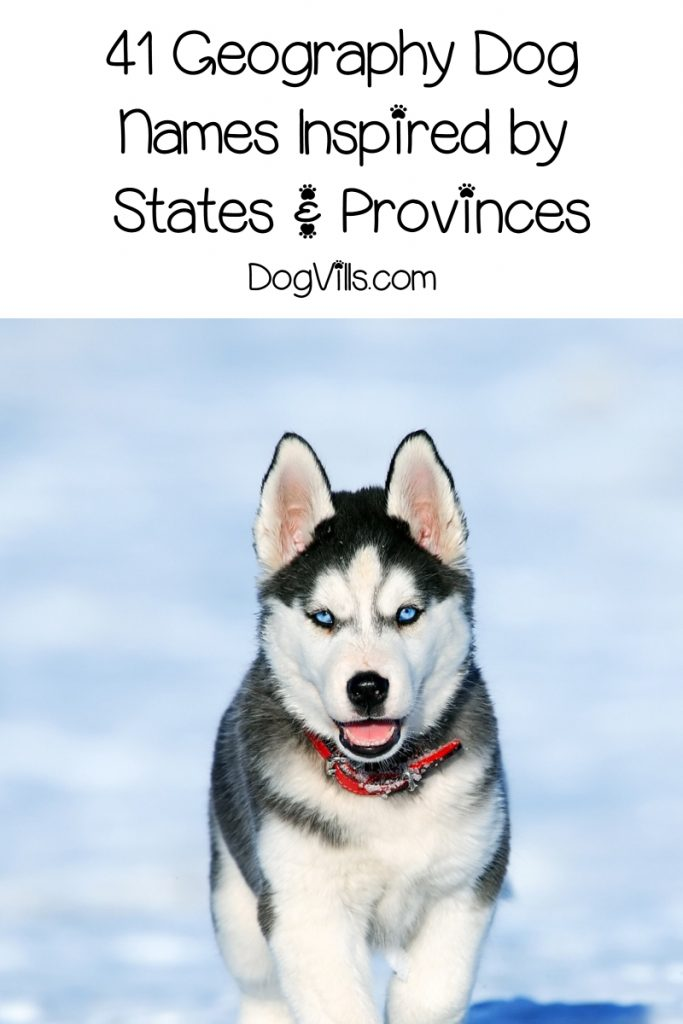 Looking for the best geography dog names? We've got 200 of them for you, including these 41 inspired by states & provinces!