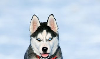 If you want a pup that can handle a little alone time, you'll definitely want to check out these most aloof dog breeds!