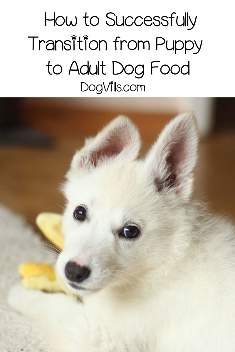 5 Tips to Successfully Transition from Puppy to Adult Dog Food