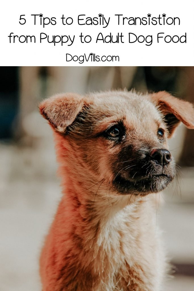 Your sweet pooch is growing up quickly, and it's time to transition from puppy to adult dog food. Check out 5 tips for a smoother switch! https://www.dogvills.com/transition-from-puppy-to-adult-dog-food #dogs #doglife