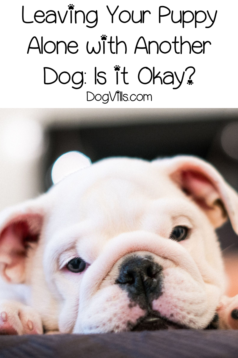 Leaving Your Puppy Alone with Another Dog: Is it Okay?