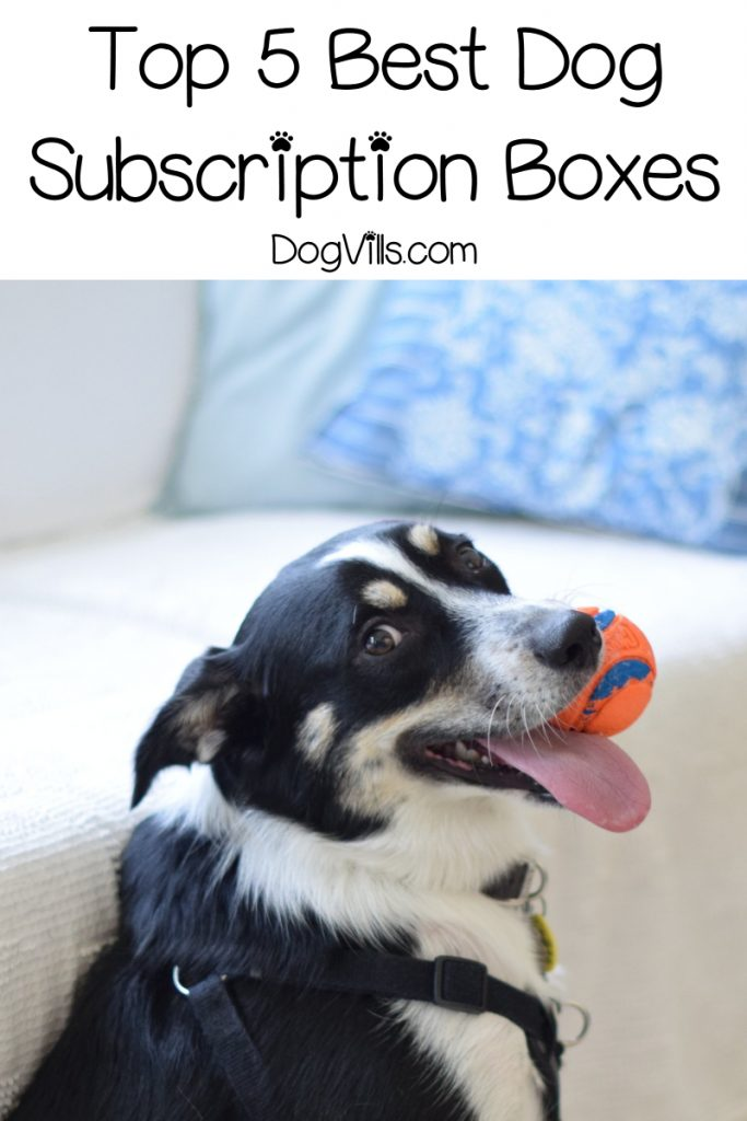 Finding the best dog subscription boxes is a bit daunting! No worries, though! We're sharing our top 5 picks to help you. Check them out! #dogtoys #doghealthtips