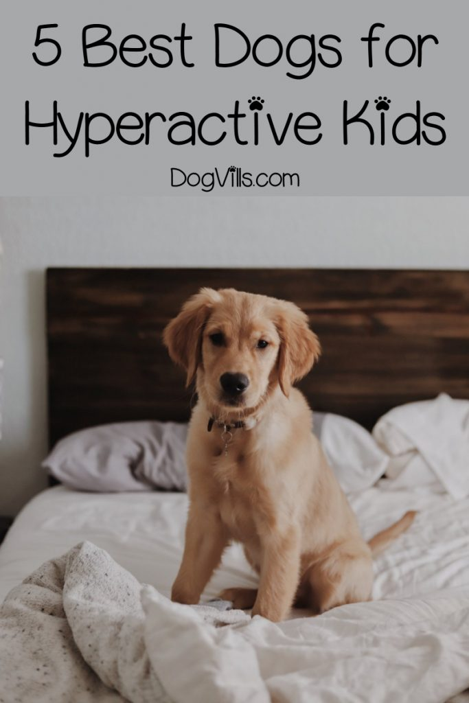 Are you looking for the best dog breeds for hyperactive children? You're in the right place! Read on for the top 5 breeds for kids with ADHD