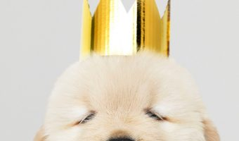 From kings & queens of yesteryear to modern monarch monikers, if you're searching for royal dog names, we've got you covered! Check them out!