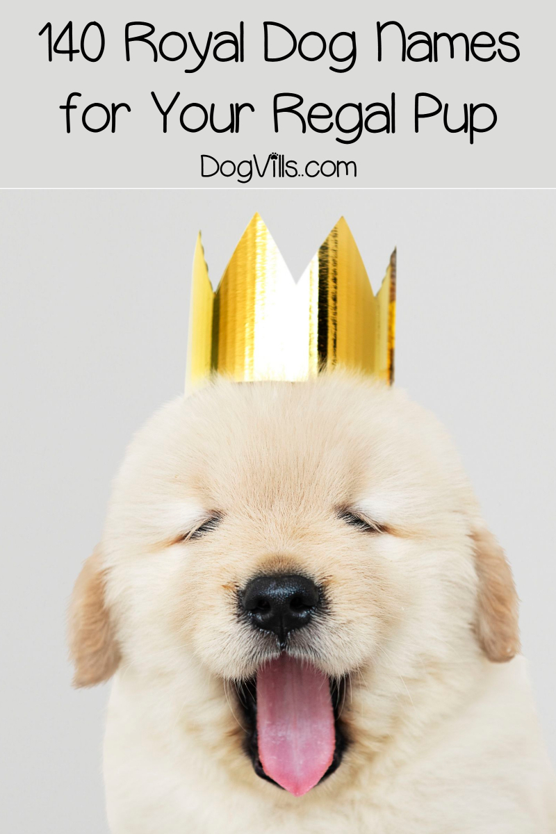 140 Royal Dog Names for Your Regal Pup