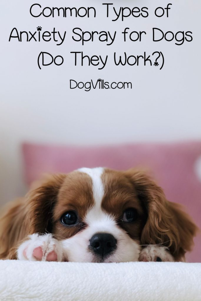 Wondering if anxiety sprays for dogs really work? Let's find out! Take a look at the most common types & what both science and other dog owners say.
