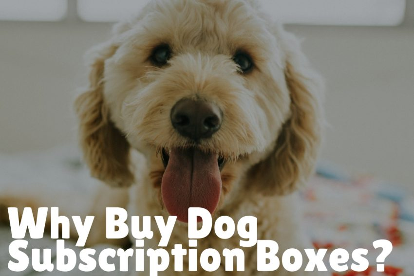 Why Buy Dog Subscription Boxes?
