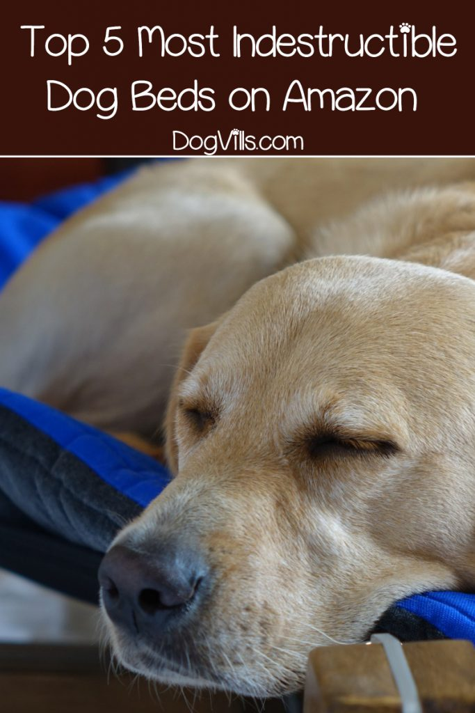 If you're looking for the most indestructible dog beds, I've got you covered! Today, we'll check out 5 beds on Amazon  that can take a beating!