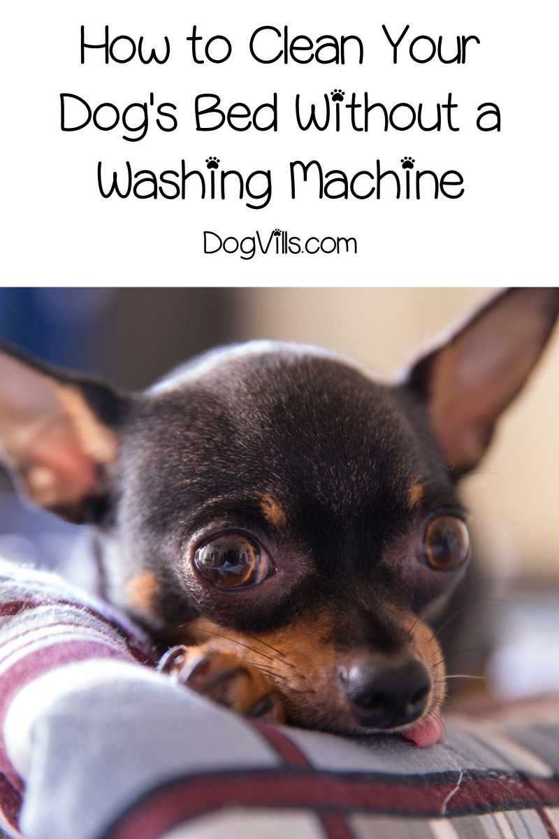 How to Clean a Dog Bed Without a Washing Machine
