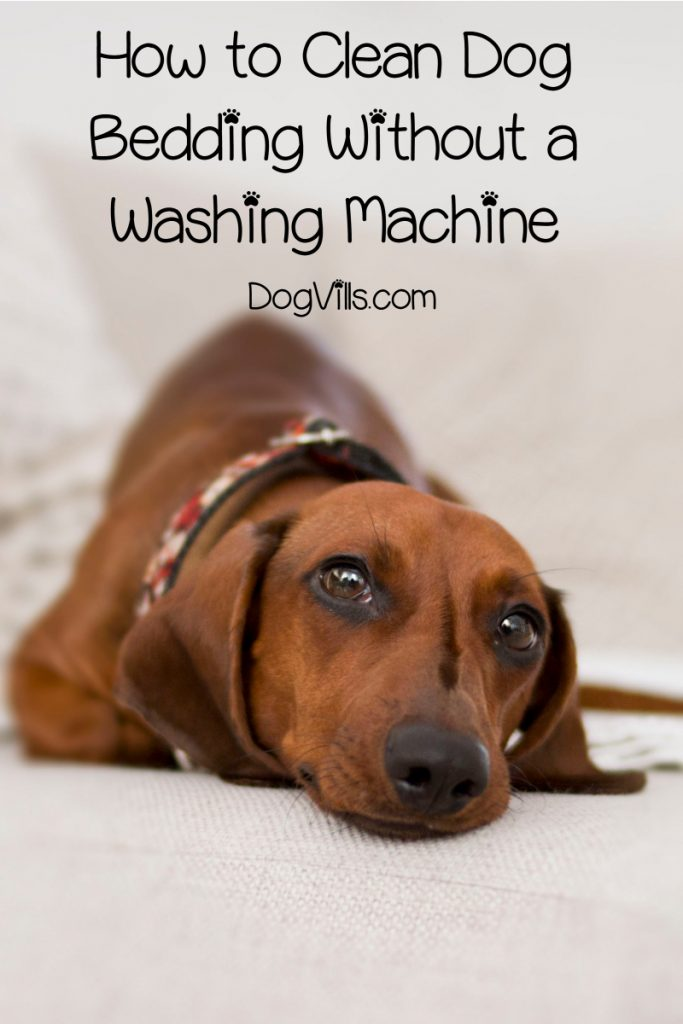 Wondering how to clean a dog bed without a washing machine? Read on for non-machine ways to quickly & efficiently clean your dog's bed and covers!