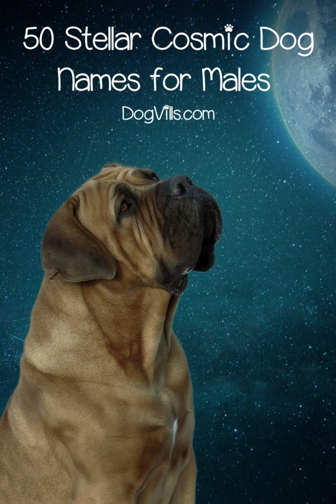 If you're looking for the best cosmic dog names for your out-of-this-world pooch, you'll love our list! Check out the top 100 ideas for males & females!