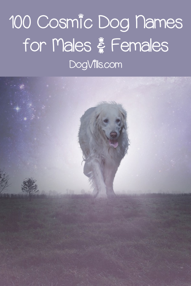 Top 100 Cosmic Dog Names for Males & Females