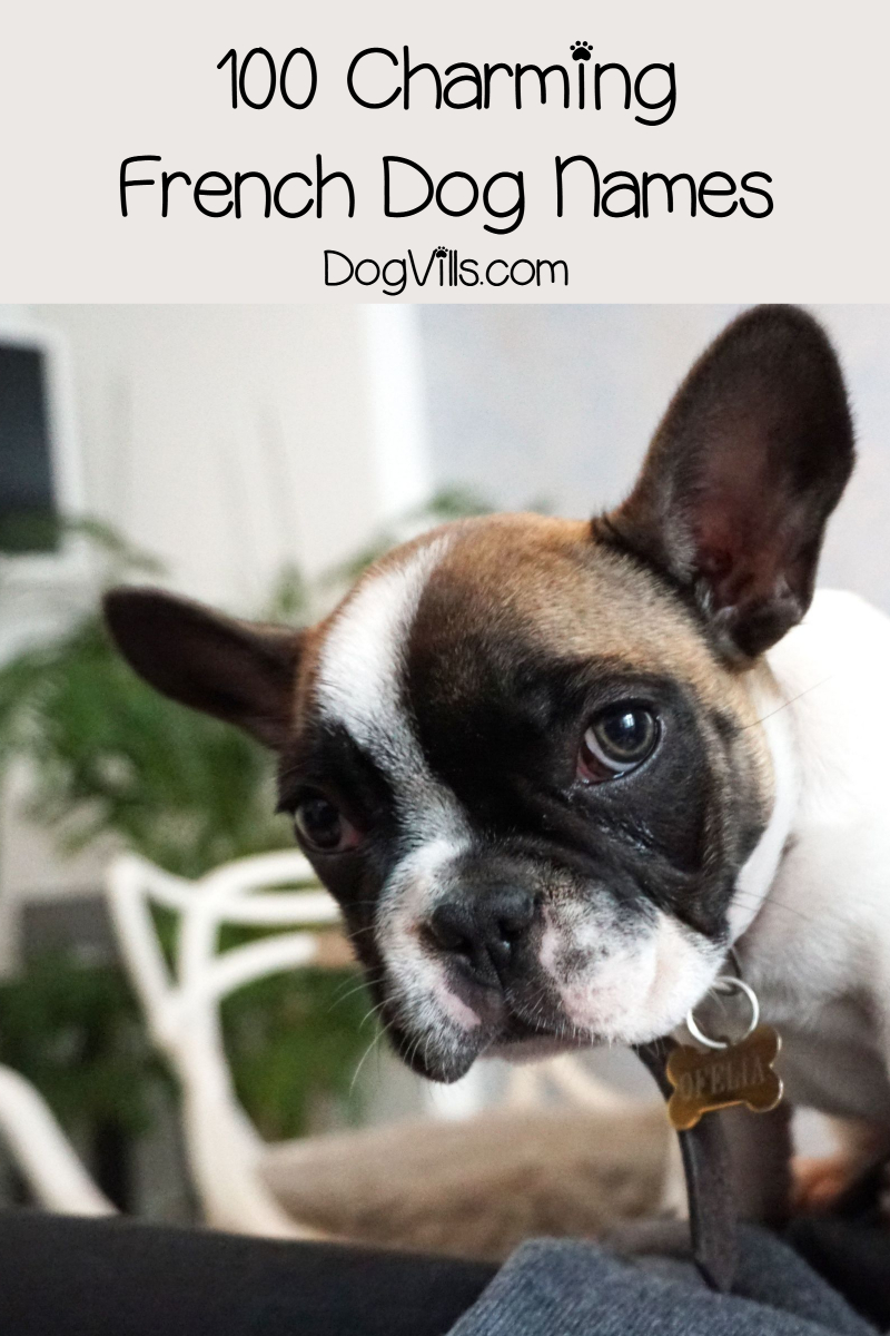 100 Charming French Dog Names