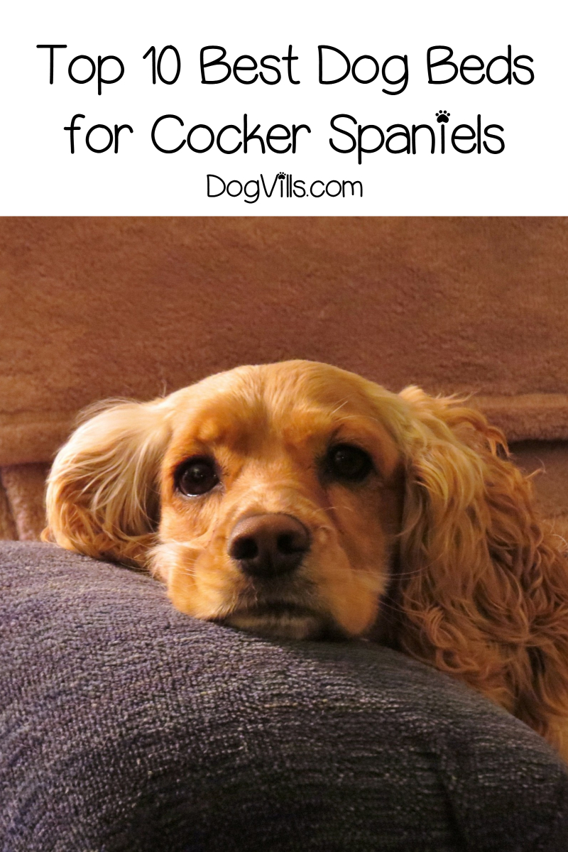 Top 10 Best Dog Beds for Cocker Spaniels