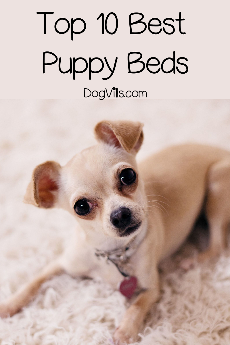 Top 10 Best Puppy Beds That Won't End Up Shredded in Minutes (with Reviews)