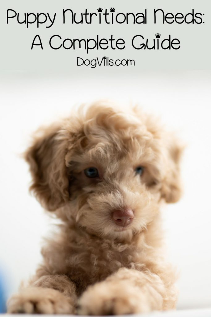 Learn about the nutritional needs of your new puppy, plus find out our top 10 picks for the best puppy food.