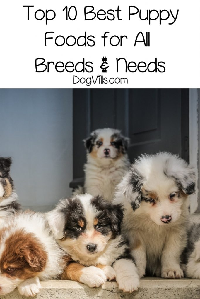 What are the best puppy foods? Check out our complete guide along with our top 10 picks for all breeds & needs!