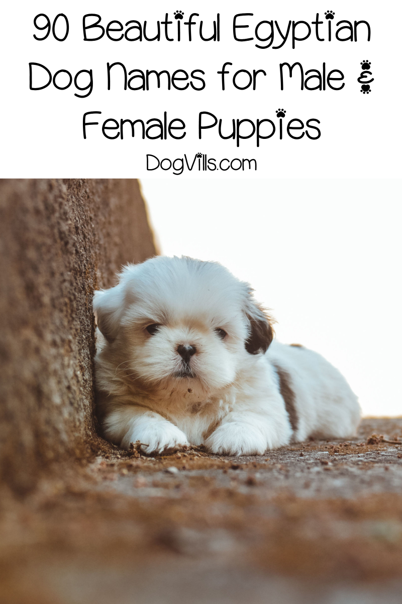 90 Beautiful Egyptian Dog Names for Male & Female Pups
