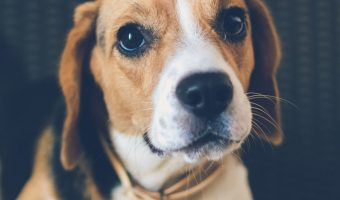 What are the worst dog breeds to train? While all dogs are teachable, some need a lot more patience than others! Check out the 9 least trainable dog breeds!