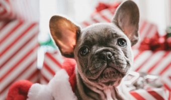 Getting a new puppy for the holidays? You'll definitely want to check out our favorite Christmas dog names for boys and girls!