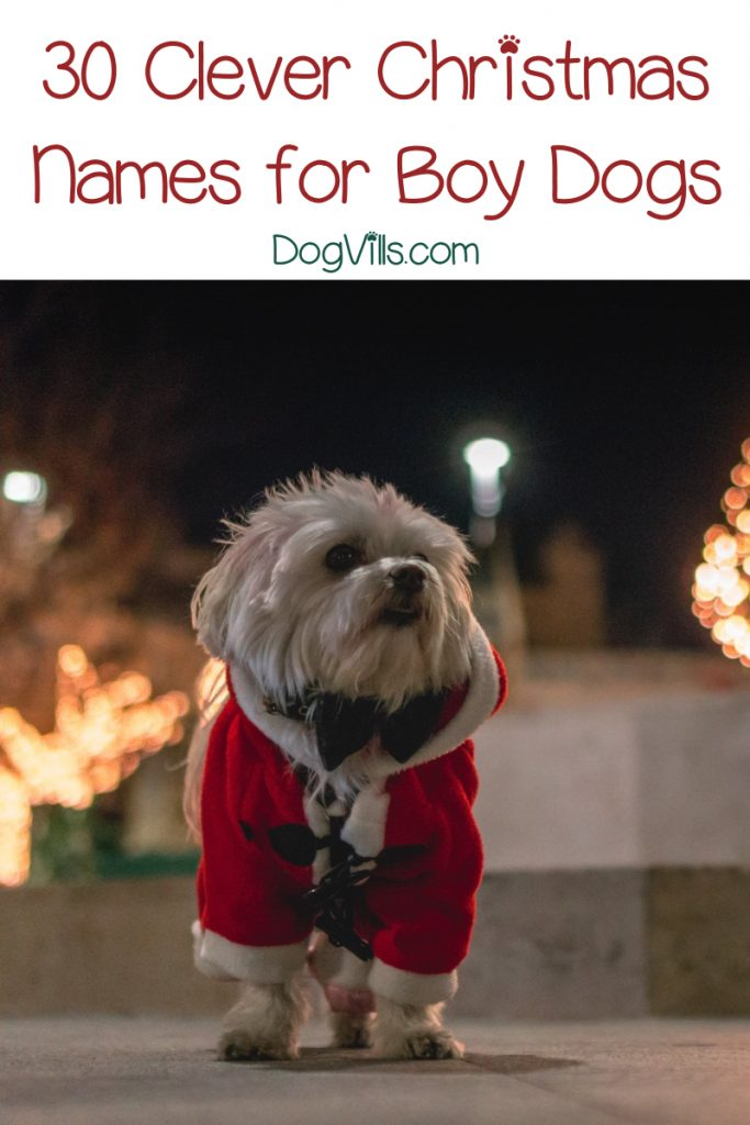 60 Fun Festive Christmas Dog Names Http Www Dogvills Com