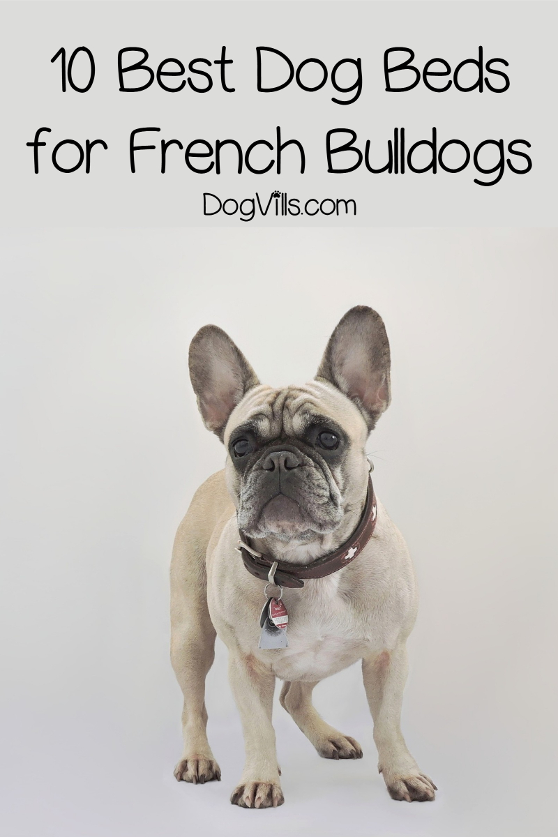 Top 10 Best Dog Beds for French Bulldogs