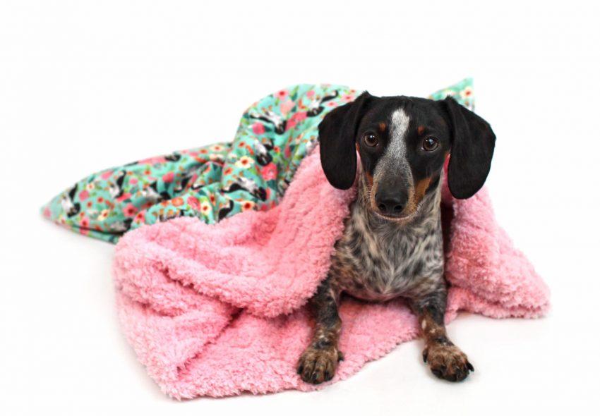 Weenie Pocket Burrow Dog Bed