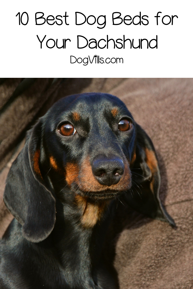 Top 10 Best Dog Beds for Dachshunds