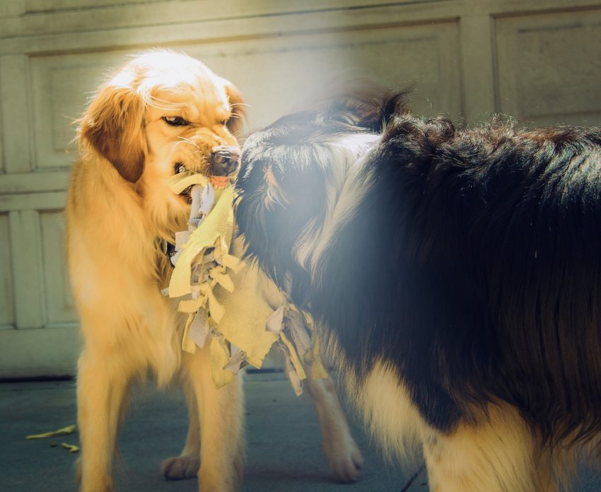 7 Tips on How to Deal with Food Aggression in Dogs - http ...