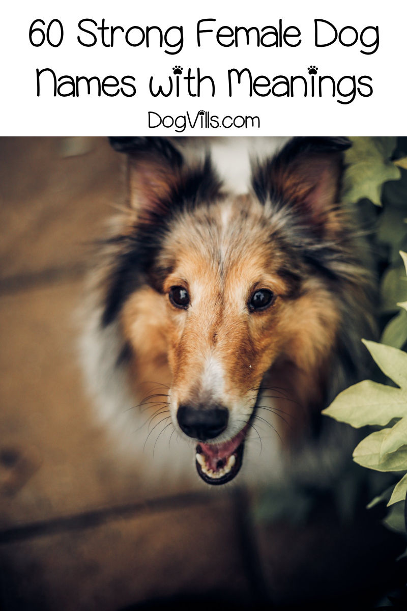 60 Fiercely Strong Female Dog Names and Meanings