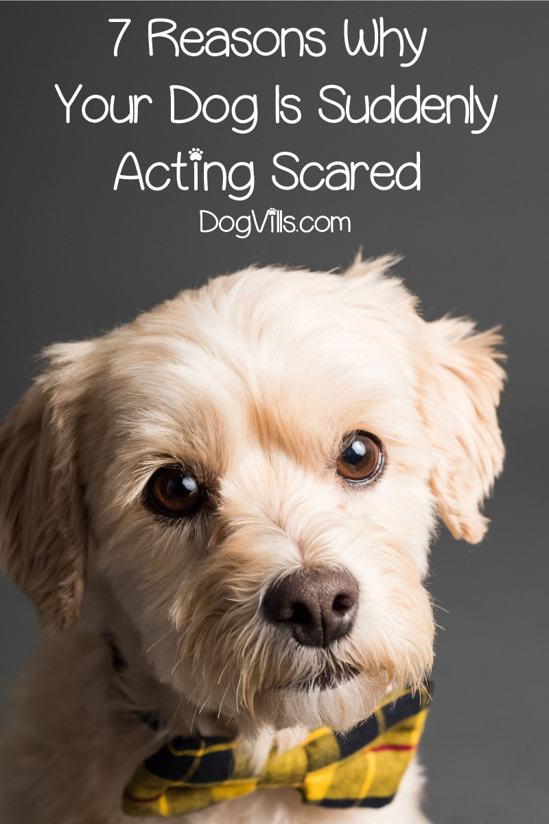 7 Reasons Why Your Dog Is Acting Scared All of a Sudden