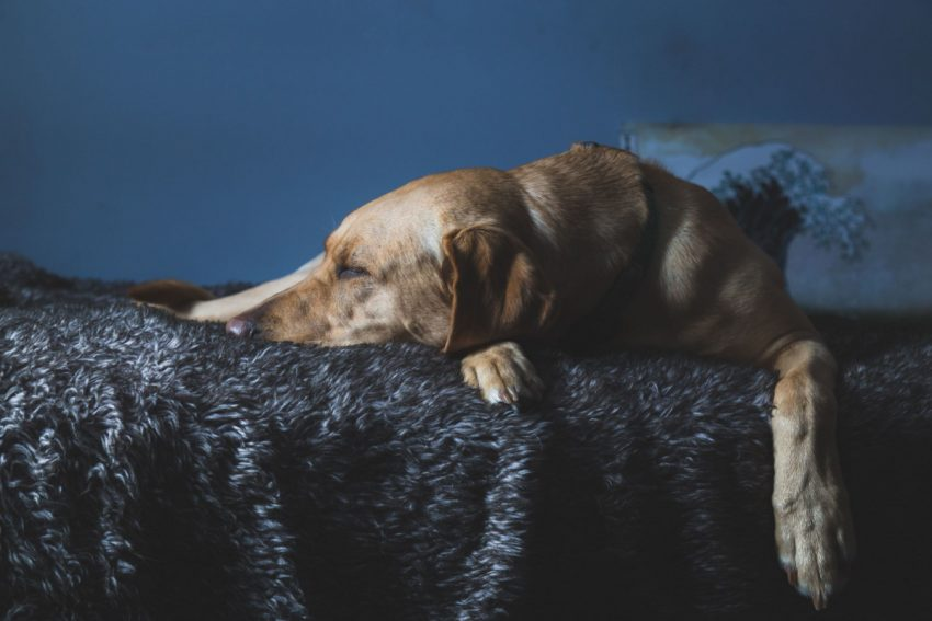 How can you prevent an older dog from falling off of the bed? Read on for 6 tips that will help your senior pooch sleep all safe and sound!