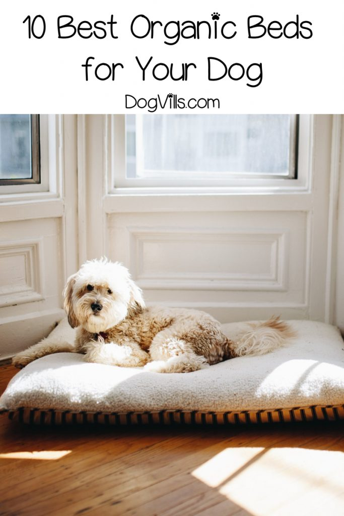 If you're having a hard time finding the best organic dog beds, let me help you out! Check out my top 10 picks for dogs of all sizes!